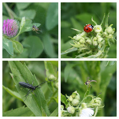 invertebrates from the fallow patch