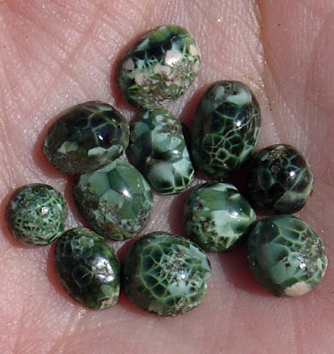 Chlorastrolite (Isle Royale Greenstone)