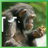 http://www.gameseducativos.com/quebra-cabeca-%E2%80%93-chimpanze/infantis