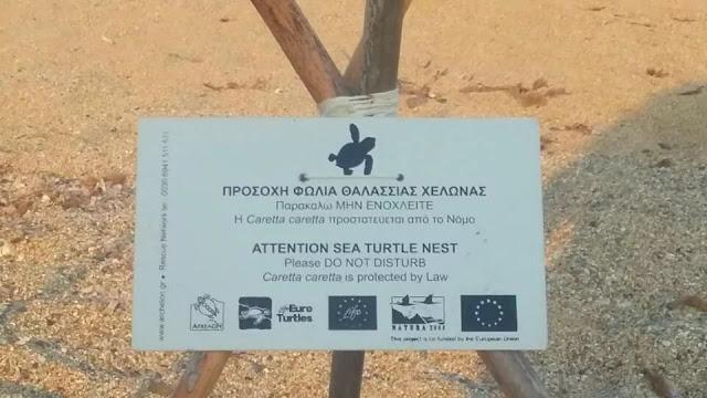 Φωλιά χελώνας καρέτα-καρέτα στην παραλία Μονολίθι