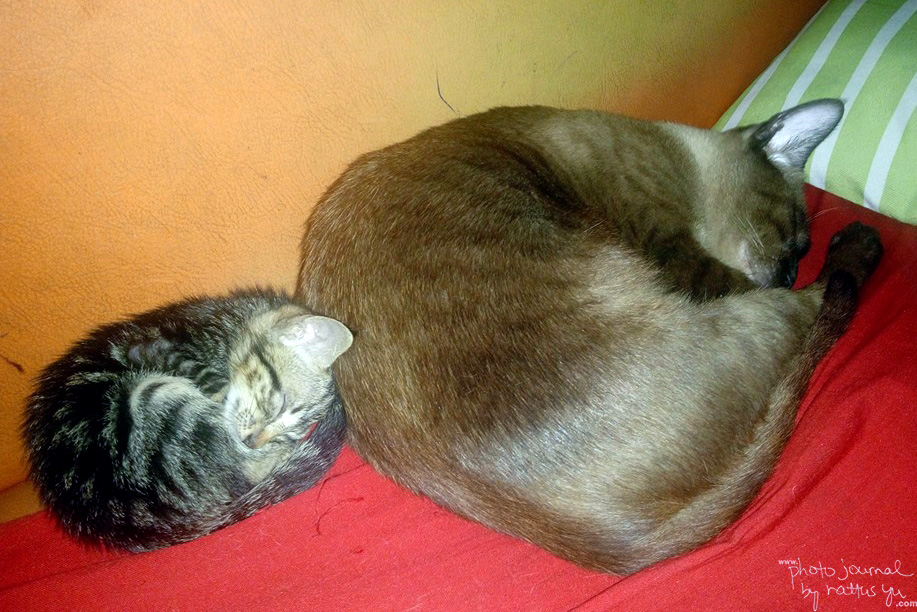 Cats Sleeping Together, Hyperactive Cat