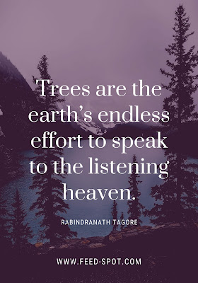 Trees are the earth's endless effort to speak to the listening heaven. __ Rabindranath Tagore