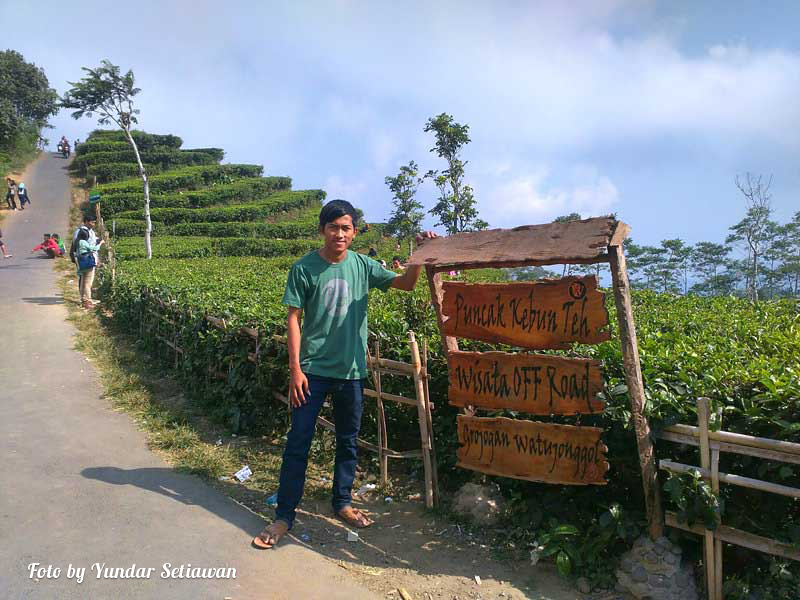 Obyek Wisata Alam Kebun Teh Nglinggo Samigaluh Kulon Progo