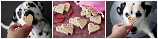 Dalmatian dogs eating heart shaped homemade Valentine's Day dog treats