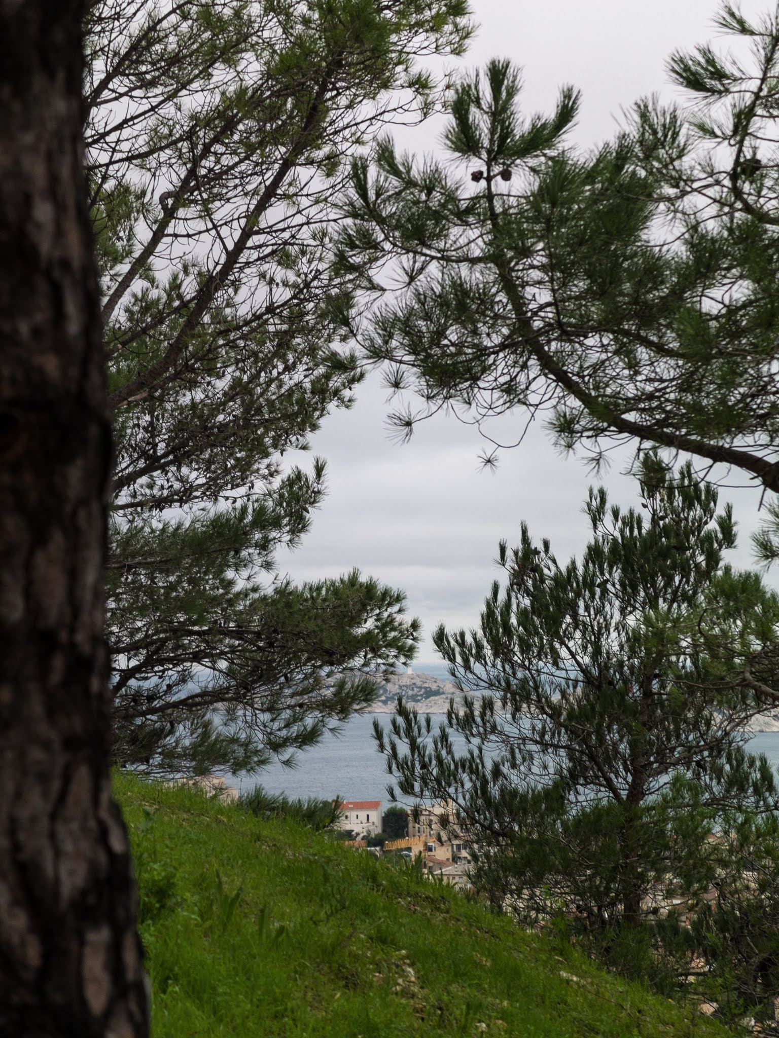 Pine trees and branches on La Garde hill in Marseille.