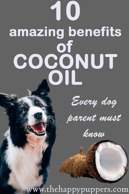 Coconut oil for dogs, one oil many solutions