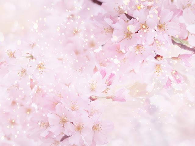 avis cherry blossom honeysuckle front porch, blog bougie, blog beauté, blog parfum