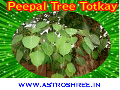 solve problems by using peepal tree totkay