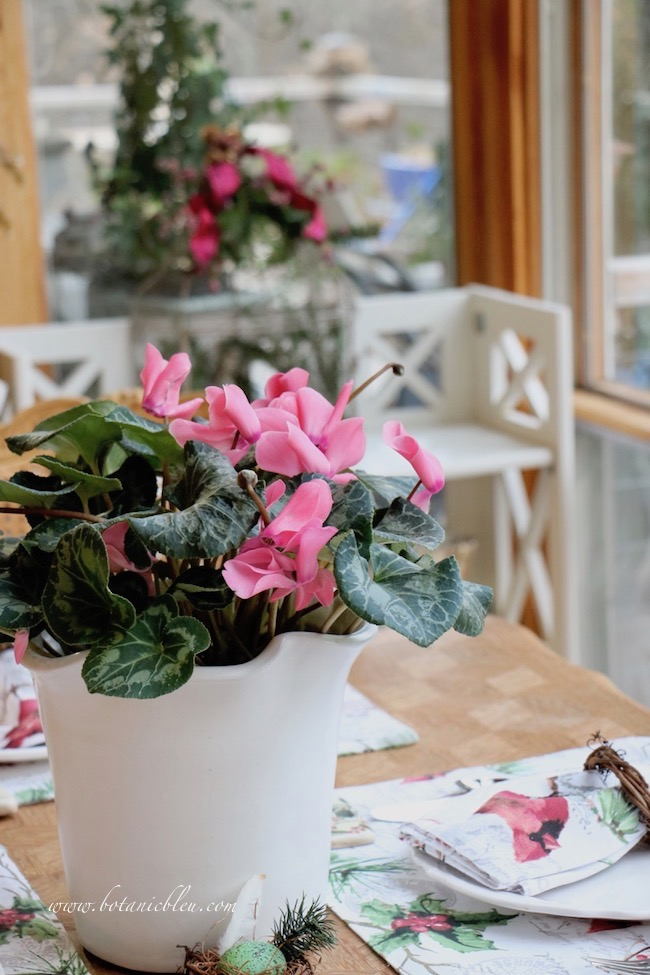 Cardinal Christmas Table Setting with a blooming cyclamen plant as a centerpiece