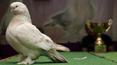 Rüyada Güvercin Görmek