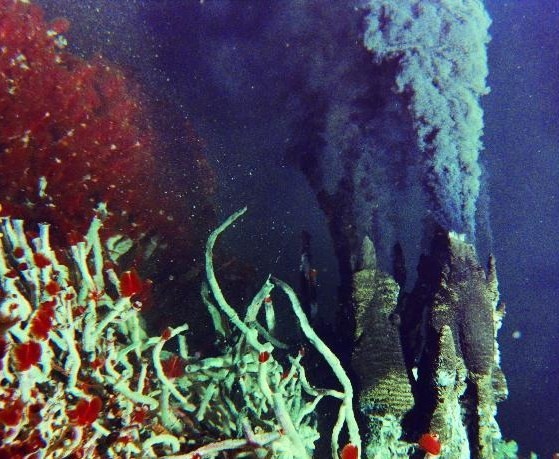 giant tube worm and bacteria relationship