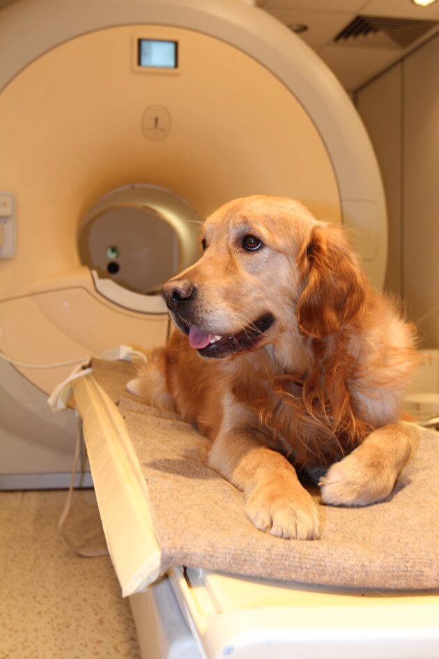 Dogs Ability To Understand Human Speech Is Better Than We Imagined