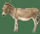 pet animals names in hindi english