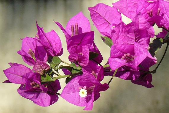 hoa giay dep nhat