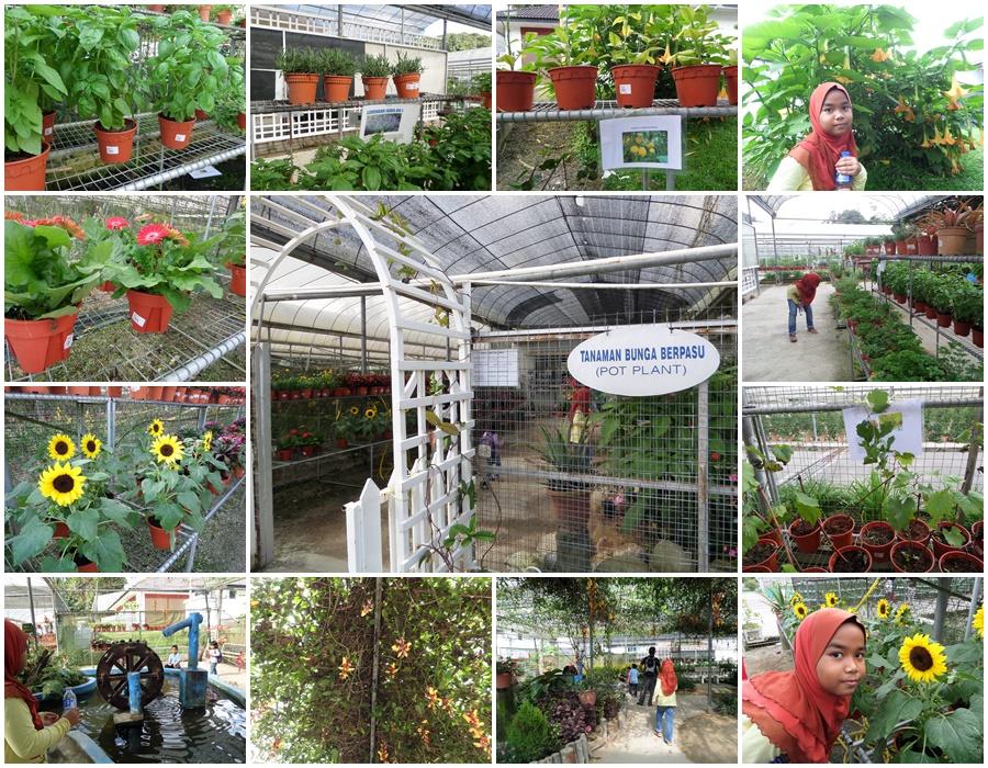 Pot Plant Tanaman Pasu