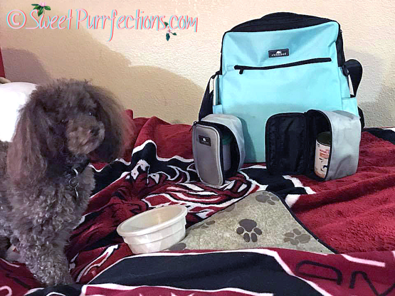 Dudley, a poodle, using the Robin Egg Blue Go Bag during a hurricane evacuation