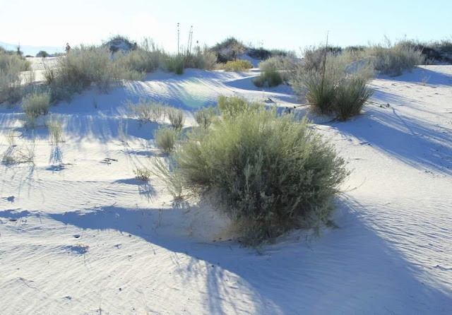 White Sands National Park New Mexico 5