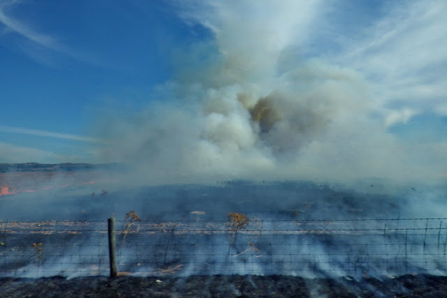 fahren, fahrt, Buschfeuer, Rauch, Feuer, Brand, Australien