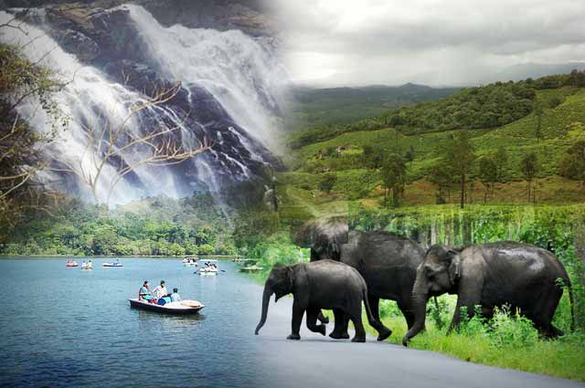 TaruGruha - Know About Wayanad
