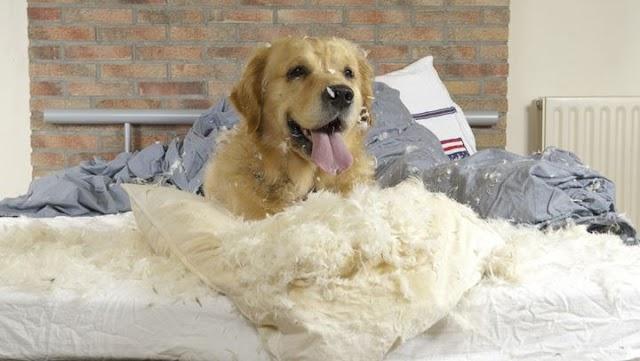 Γιατί ο σκύλος σας άρχισε να λερώνει ξαφνικά στο σπίτι;