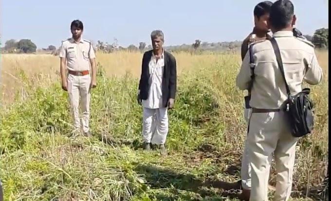 नीमच जिले मे नारकोटिक्स विभाग की टीम ने अवैध 9 खेतों में 29 आरी अफीम की खेती को किया नष्ट ,साथ ही उसी स्थान पर 2 आरी गांजे की खेती को भी नष्ट कराया गया ।
