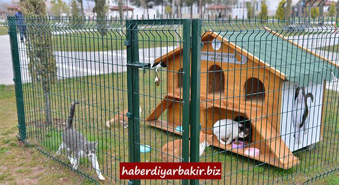 Diyarbakır'da evsiz kedi kalmayacak