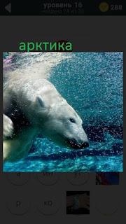 470 слов. все просто белый медведь ныряет в воду 16 уровень