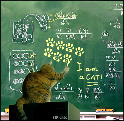 Photoshopped Cat picture • Yesterday, in my classroom an irreverent cat wrote on the chalk board...