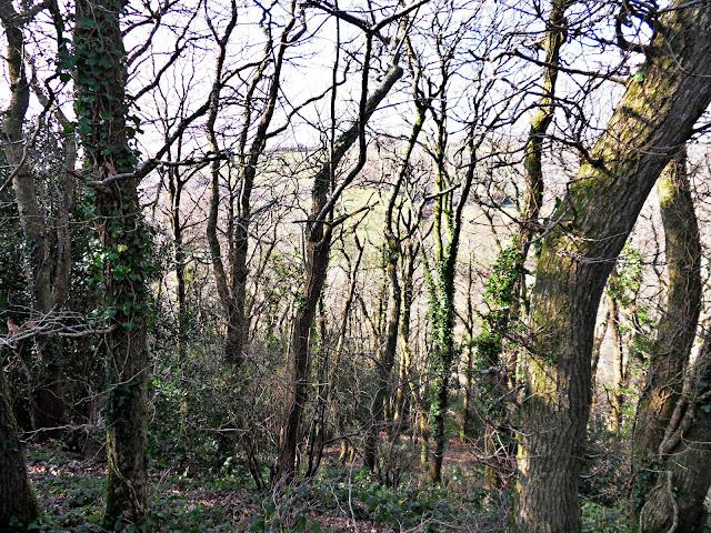 Kings Wood, Cornwall