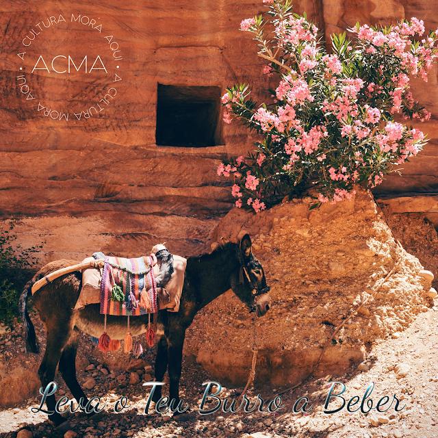 Burro parado junto a um arbusto de flores rosas, foto em tons quentes