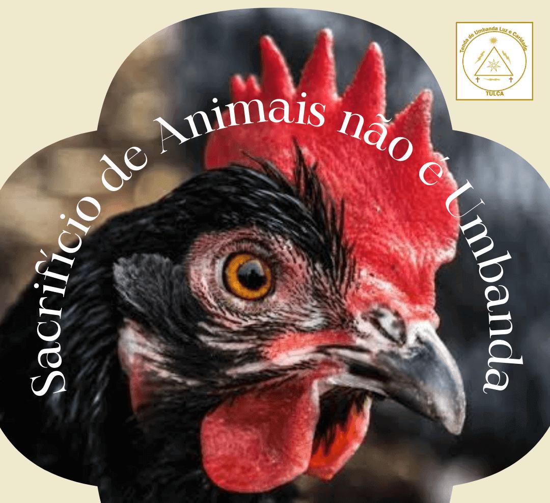 Sacrifício de Animais não é Umbanda