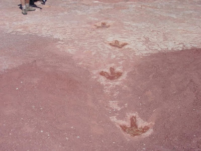 Creation science Genesis Flood models offer the best answers for formation and preservation of dinosaur tracks