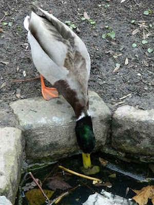 ogród przyjazny ptakom, slow life, blog