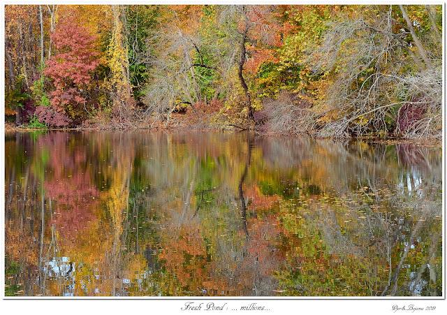 Fresh Pond: ... millions...