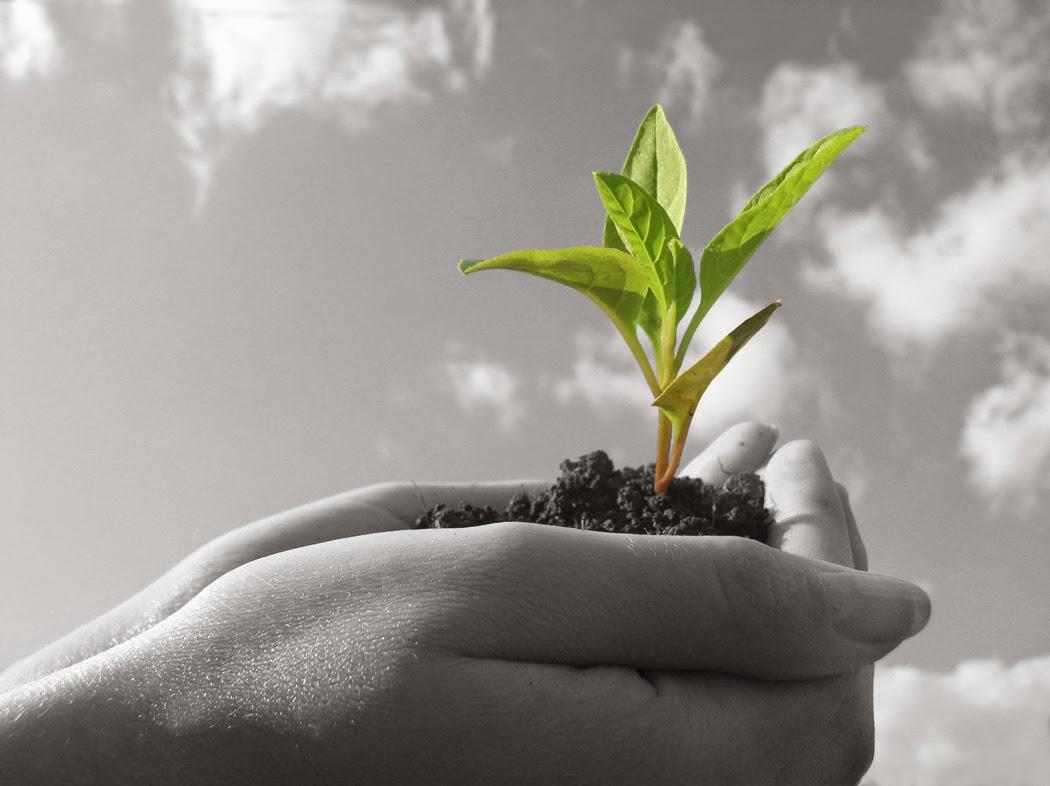 Como construir uma estratégia vencedora para atingir seus sonhos e conquistar sua independência financeira.