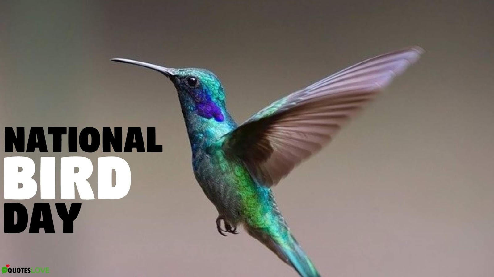 53+ (Best) National Bird Day: Quotes, Wishes, Status, Messages, Images