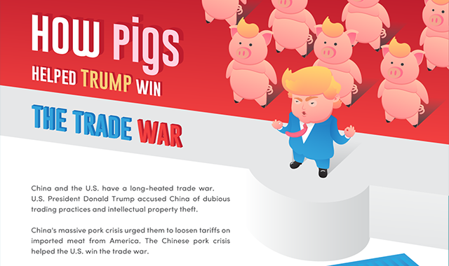 How Pigs Helped Trump Win the Trade War #infographic