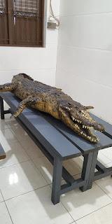 Museum Flora dan Fauna Tarakan - Tarakan.Info