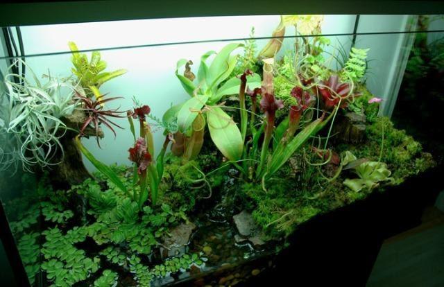 Diy Garden Fish Water Tank
