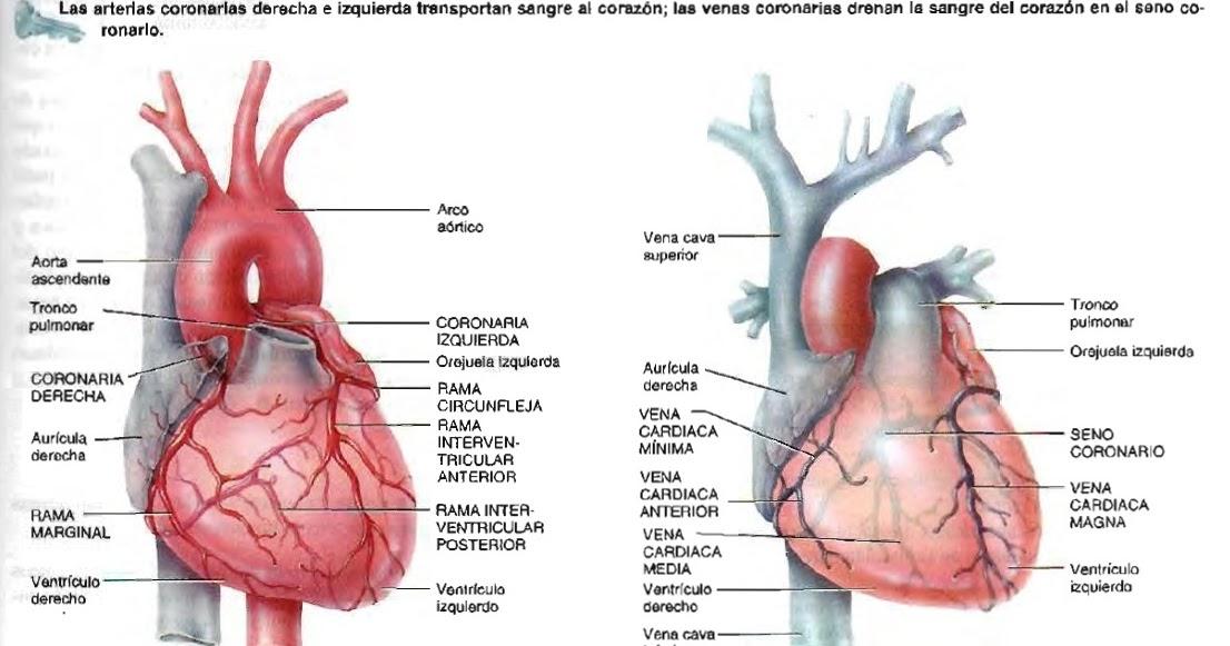 que diferencia hay entre infarto y angina de pecho