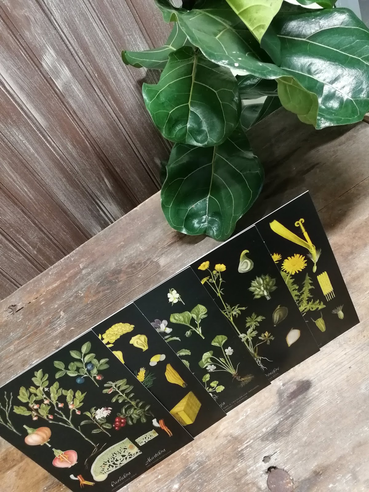 kasvi kortit tausta