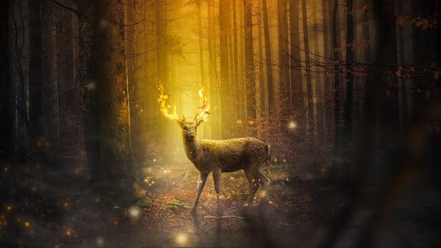صور غزال في الغابة