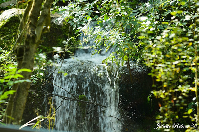 Cascade dans un enclos au Bioparc Doué-la-Fontaine