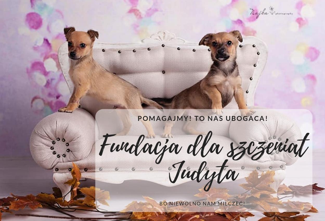 Judytowo... cudowny azyl dla psich dzieci!