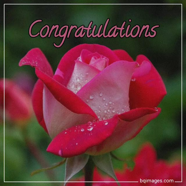 congratulations pictures