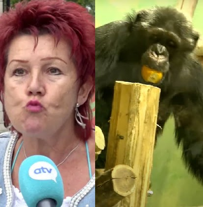 Woman banned from zoo after 4-year 'affair' with chimpanzee