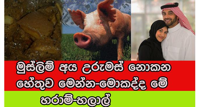 https://www.gossiplankanews.com/2019/05/pig-muslim-issues.html