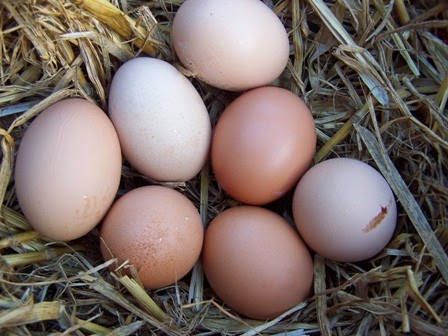 man sent to hell for stealing egg and judgement of God on stealing