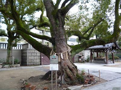 難波神社ご神木