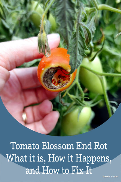 how to prevent blossom end rot in the garden